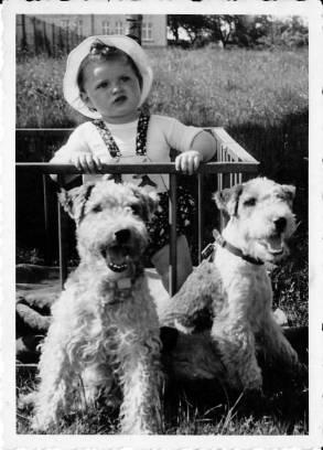 Helmut mit zwei Hunden