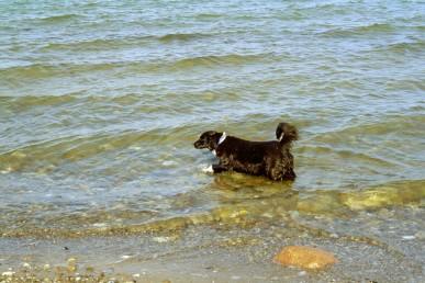 Polly schleicht ins Meer